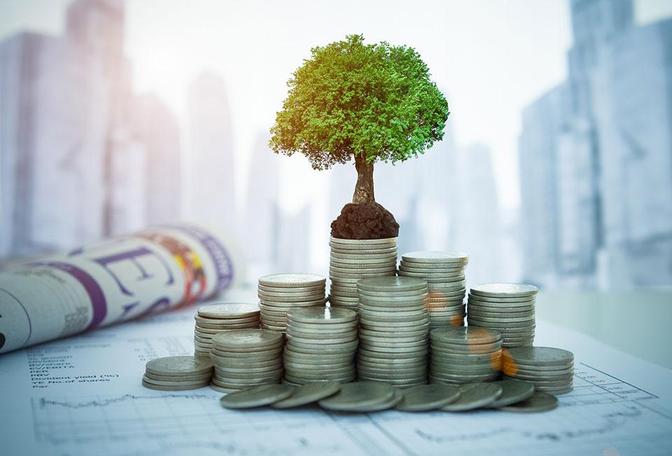 עץ צומח על כסף