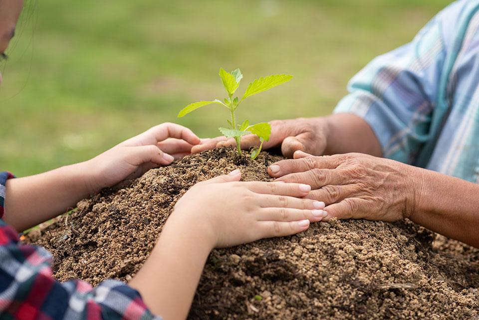 עץ קטן נטוע באדמה בידיים