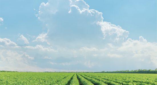 רקע של קרקע חקלאית